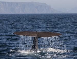 219-vesteraalen-whalesafari.no