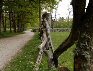 29-jomfruland-eichenwald-nikolai-engebretsen