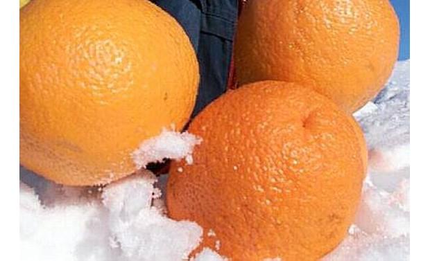 Apfelsine im Schnee