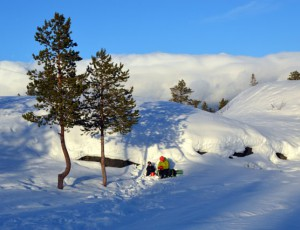 Bäume in Alta (c) Saskia sehmisch