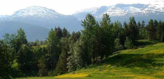 Blick in Richtung der Berge oberhalb des Nordfjords