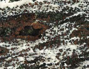 stein-koronitt