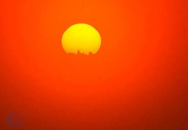 baumwipfel im nebel vor sonne