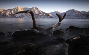 Svalbard-reinhorn-lite