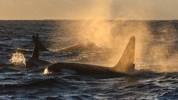 Wale Andenes Foto: Kenneth Pettersen