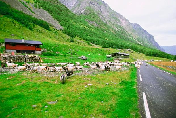 Unterwegs in Norwegen, © Medioimages/Photodisc/Thinkstock