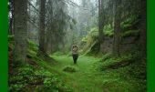 Oslos Märchenwälder