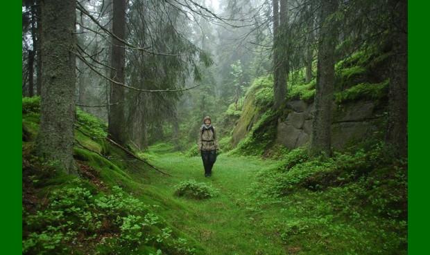 Eventyrskog – Foto Naturvernforbundet