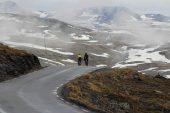 Mit dem Rad durch Norwegen – die schönsten Radwege entlang der Fjorde