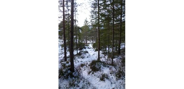 Hemnes Wald