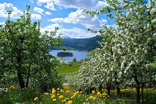 Ulvik am Hardangerfjord, Copyright: Øyvind Heen, Visit Hardangerfjord