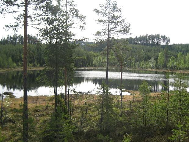 Finnskogen Copyright H.tjerns wikipedia