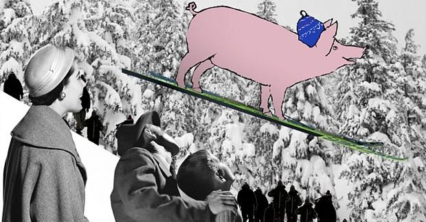 Schweine mit Ski Copyright Annica Thomsson forskning no