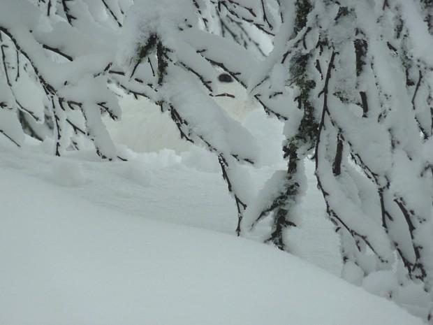 Schneehase Winter Skeikampen
