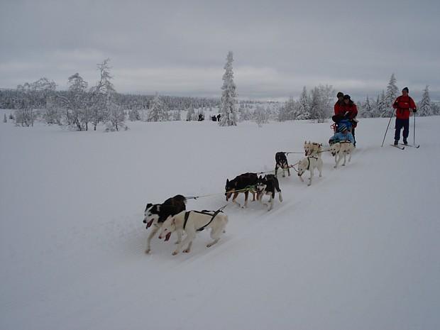 Hundeschlitten Schnee Winter Nordseter