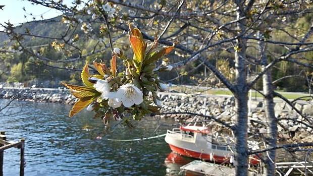 Ostern Heiko Scholze – Blpüte Frühling