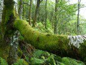 Norwegens Urwälder