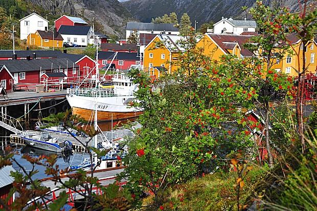 Herbst Nusfjord Lofoten Fruechte