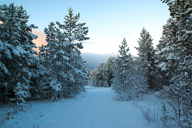 13 Winter Schnee Wald Kiefern