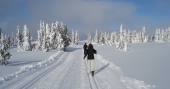 Snøgg - 02 - Norwegen-News 2020
