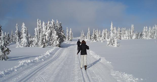 Langlauf Schnee Winter Ski