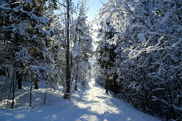 Alta Winter Schnee Baum Wald Weg