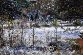 Der erste Schnee im Norden
